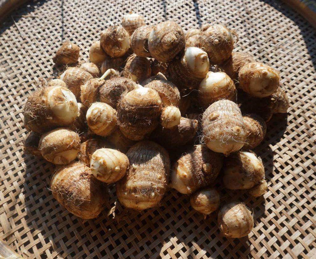 あんがとう農園の自然栽培した里芋