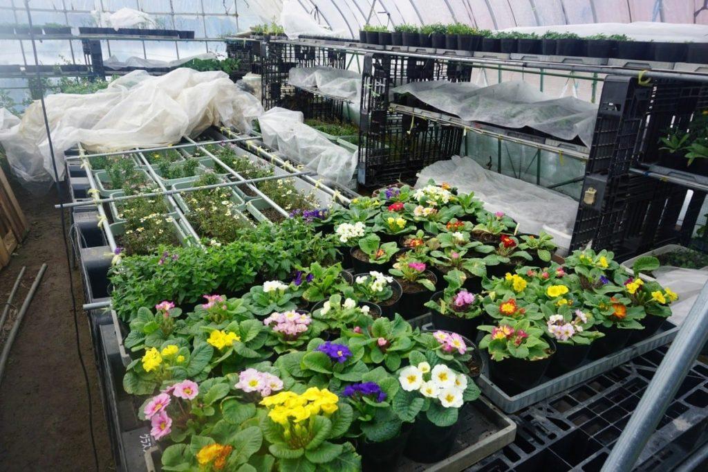 ハーブやエディブルフラワーの無農薬苗の販売を予定