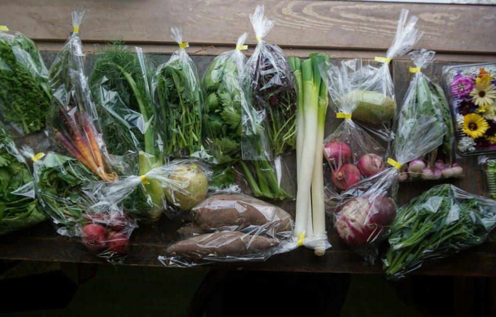 無農薬野菜セット バーニャカウダセット エディブルフラワー 通販