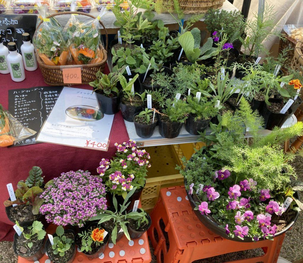 春ららら市で明日もハーブとエディブルフラワーの苗を販売します